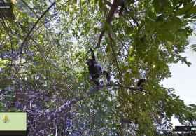 谷歌街景带你领略坦桑尼亚的贡贝国家公园
